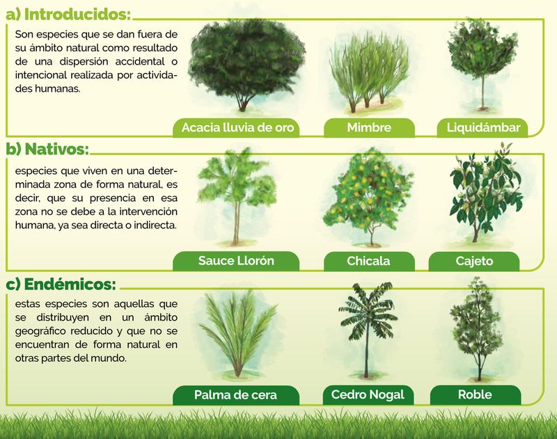 clasificación de arboles