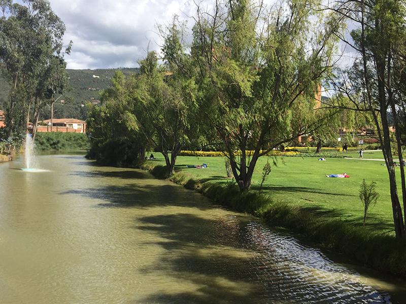árboles del campus Unisabana